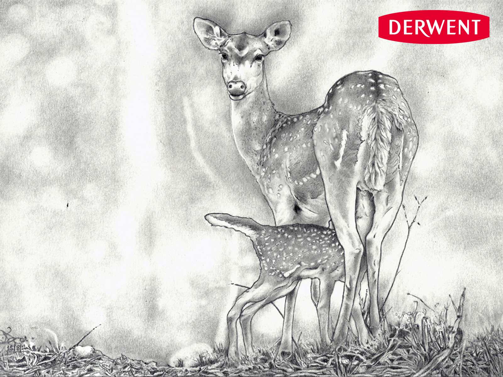 Displaying 18u0026gt; Images For - Deer Sketches In Pencil...